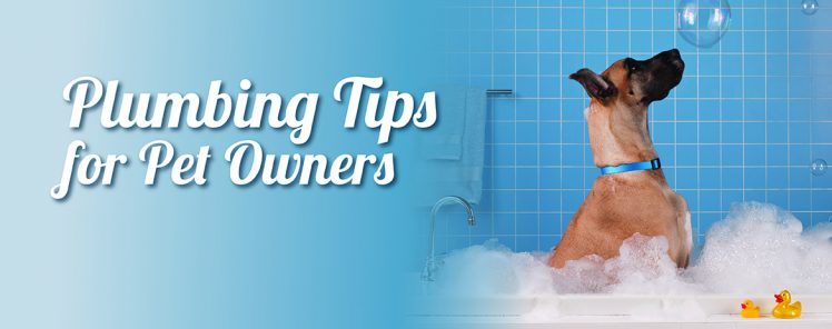 Plumbing Tips for Pet Owners