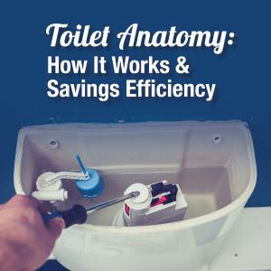Toilet Anatomy: How does it work? & Savings Efficiency